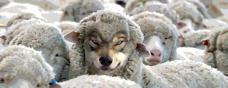 bad wolf sheep