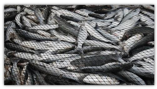 fuller nets